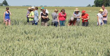 Herbologai vertino Lietuvos ir Lenkijos ūkininkų pasėlių piktžolėtumą – problemos panašios