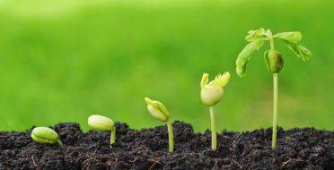 Šimtmečio agronomų konkursas įsibėgėja