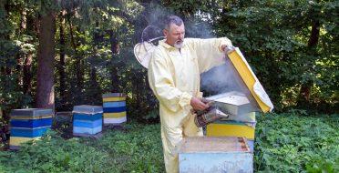 ASU Metų dėstytojas: be bičių Lietuvoje nebūtų nė duonos