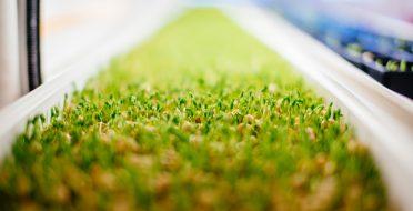 Hidroponinė pašarų auginimo technologija pasiekė Malį